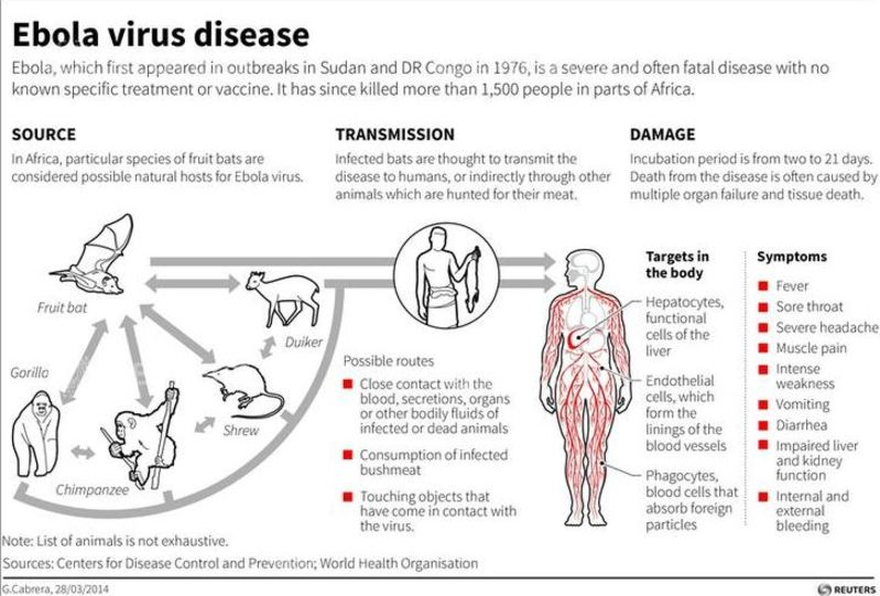 health summary ebola Cataract surgery can be safely performed on ebola virus disease survivors with impaired vision, researchers report emory health sciences summary:.